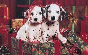 desktop christmas puppy backgrounds