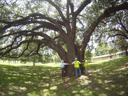 the importance of preserving trees lawn management company