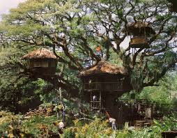 I Have Built A Treehouse - kevin kidney original swiss family robinson tree found