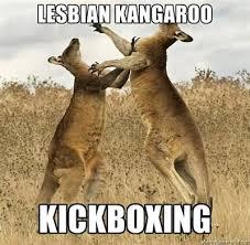 Lesbian Birthday Meme - 45 most funny kangaroo meme photos and images