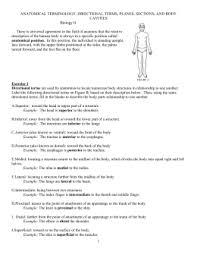 Directional Terms Human Anatomy Terminology Stations Lab Mccarter Anatomy U0026 Physiology