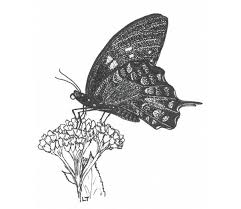butterflies in your backyard nc state extension publications