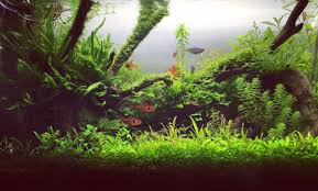 Most Beautiful Aquascapes Wabikusa Hashtag On Twitter
