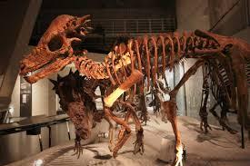 Dinosaur Head Wall Mount Timeline Of Pachycephalosaur Research Wikipedia