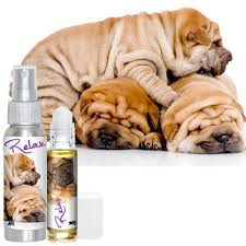 shop the blissful dog chinese shar pei collection skin u0026 coat care