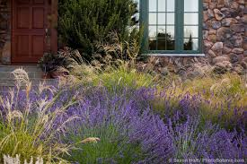 save water front yard meadow garden with lavender and ornamental