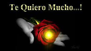 imagenes de amor con rosas animadas una rosa para ti frases con imágenes bonitas de amor youtube