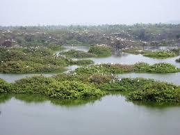 vedanthangal bird sanctuary wikipedia