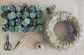 succulent wreath diy succulent wreath