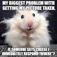 Mouse Memes - stressed mouse memes imgflip