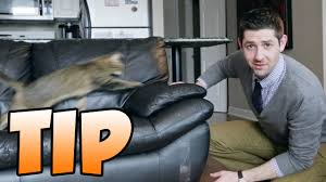 sofa that cats won t scratch tip for how to stop your cat from scratching the furniture youtube