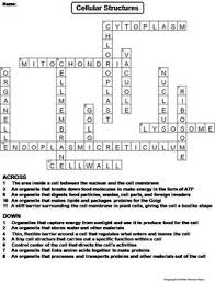 and animal cell organelles and function worksheet crossword puzzle