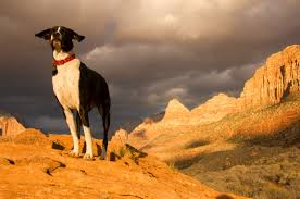 state with most dog owners 2016 hiking with dogs in zion the do u0027s and dont u0027s