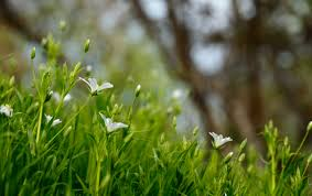 spring gardening in texas san antonio daily sun