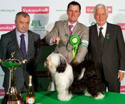 australian shepherd crufts 2016 crufts 2013 results bob group and best in show