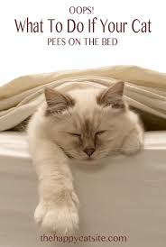 Dog Peed On Bed How To Stop Your Cat On Bed Covers And Pillows The Happy
