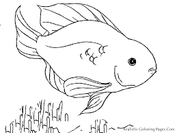realistic tropical fish coloring pages