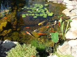phoenix pond blog the pond gnome