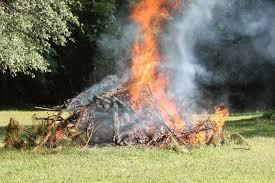 Trees Backyard Cutting And Burning Large Limbs From Backyard Trees Backyard