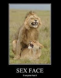 Funny Motivational Memes - funny joke lol meme memes caption comic motivation