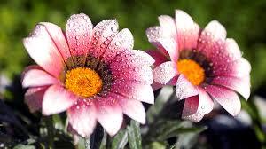 flowers images hd qygjxz