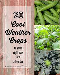 Fall Vegetables Garden by 20 Cool Weather Crops To Start Right Now Preparednessmama