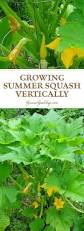 Types Of Vegetable Gardening by Best 25 Vertical Vegetable Gardens Ideas On Pinterest Tiny