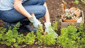 how to plant bulbs trees u0026 hedges at homebase co uk