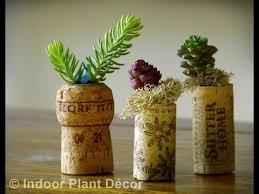 easy flowers to grow indoors easy indoor plants easy indoor plants to grow youtube