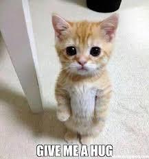 Give Me A Hug Meme - give me a hug meme kitten timesheet 42293 memeshappen