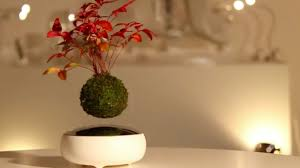 no home is complete without a magical floating air bonsai tree