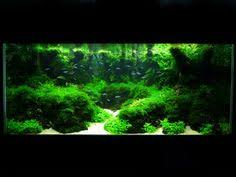 Most Beautiful Aquascapes 294 Likes 15 Comments South Bay Aquascaping Southbayaqua On