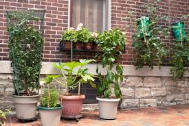 container gardening create your own vegetable container garden ijugaad blog