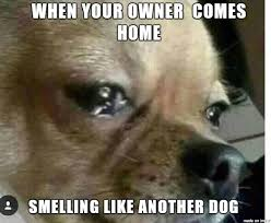 Sad Dog Meme - sad dog meme on imgur