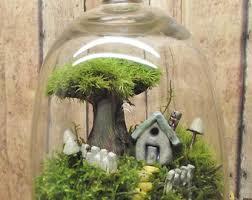 moss terrarium etsy