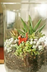 103 best succulant garden images on pinterest succulents garden