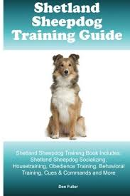 belgian sheepdog training guide the shetland sheepdog is different from a miniature collie dog