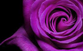 purple flowers purple flowers 14063 2560x1600 px hdwallsource
