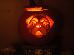 Halloween Pumpkin Crafts Puggy Happy Halloween I Would Carve A Pumkin If I Could Get This
