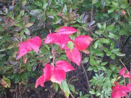 fall color nantucket atlantic east nantucket estate