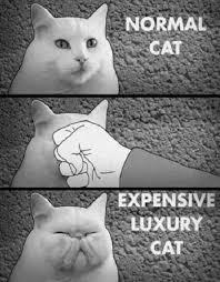 Persian Cat Meme - the origin of persian cat lol pinterest persian cats cat