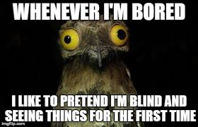 When I M Bored Meme - weird stuff i do potoo meme imgflip