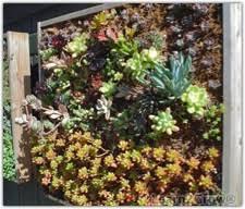 vertical living wall living wall garden design plant on wall
