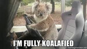 Koala Meme Generator - koala bear meme generator best bear 2018