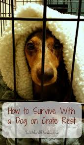 How to Survive With a Dog on Crate Rest