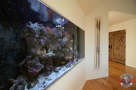 aquarium design aquarium service los angeles aquarium