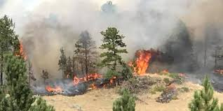 Wildfire Case Drop Rate by Gov Declares Emergency As Lodgepole Complex Fire Reaches 200 000