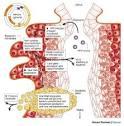 BangkokHealth.com - การรักษามะเร็งปากมดลูก (cervical cancer)