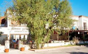 Summer Gardens Bitez - cheap holidays to summer garden makumba hotel u0026 apartments bitez