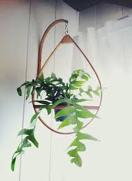 Modern Hanging Planters by 62 Best Hanging Plants Images On Pinterest Plants Hanging